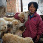 Äter alla Kineser Hund? Thumbnail