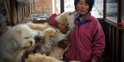 Äter alla Kineser Hund?